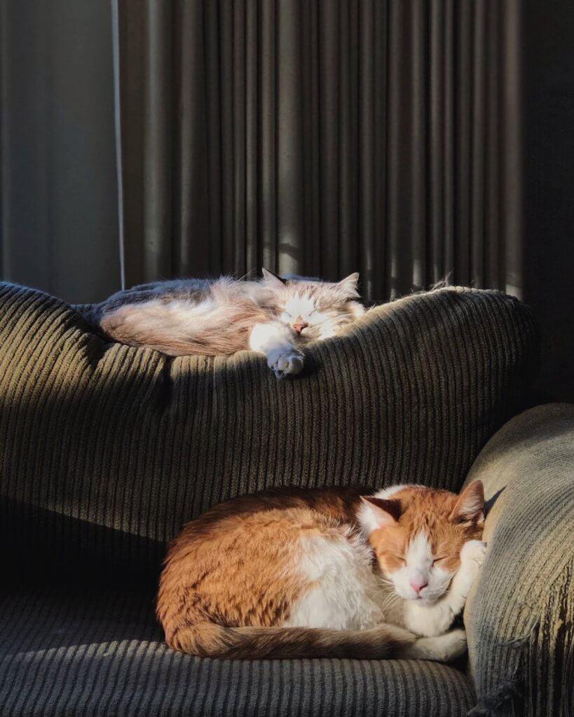Uykusuzkuk Duygusallaştırır