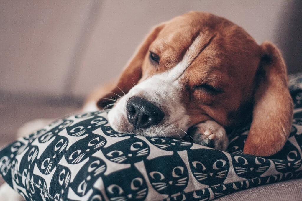 Why We Sleep Kitap Yorumu
